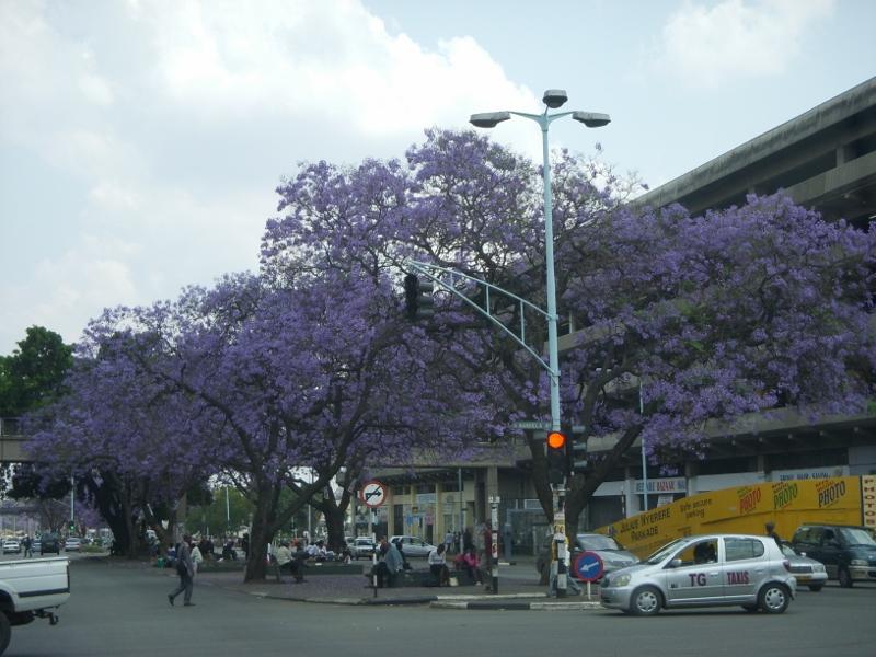 Straßenszene in Harare